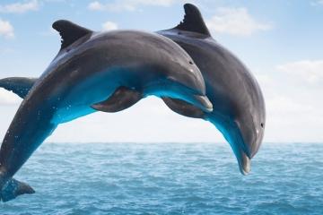 10 واقعیت جالب درباره دلفین ها