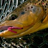 ماهیگیری با قلاب و اموزش پرورش ماهی